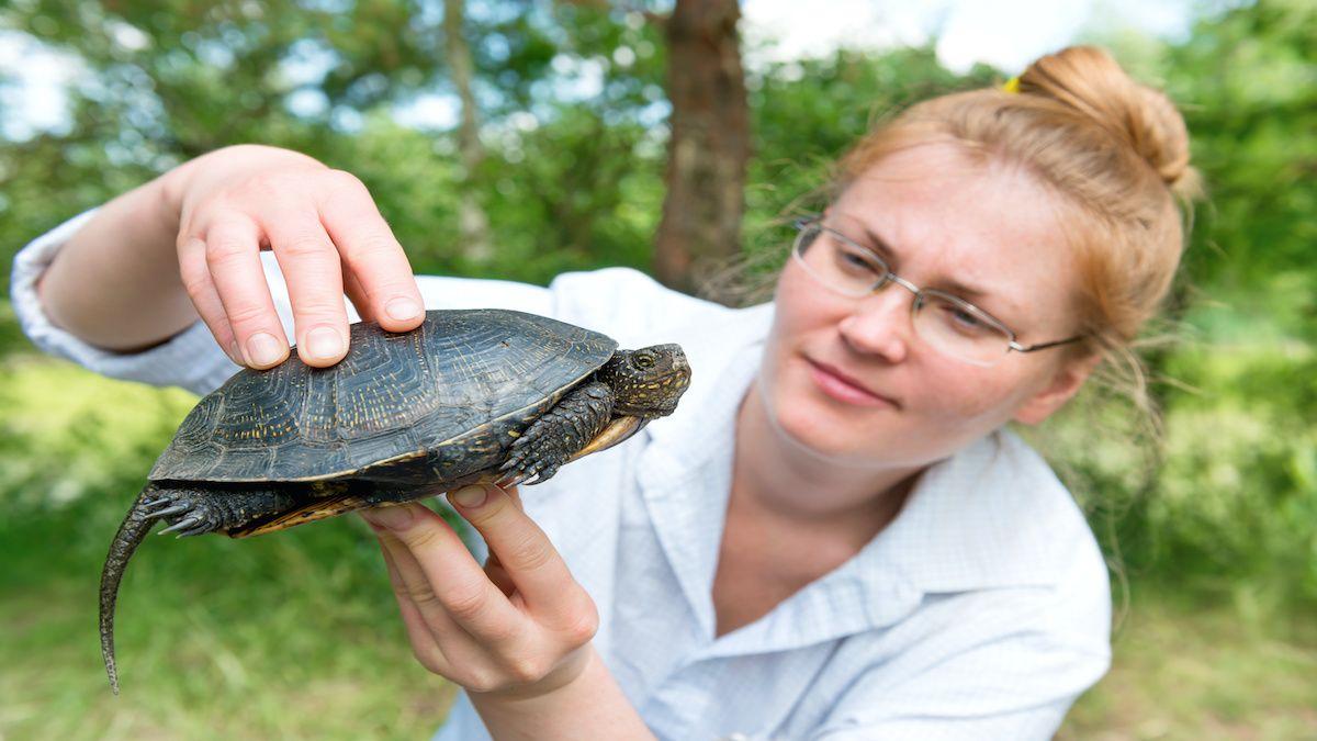 Le zoologue et l'éthologue sont deux métiers au service des animaux.